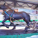 岩見沢駅のばん馬