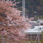 桜と九州新幹線さくら